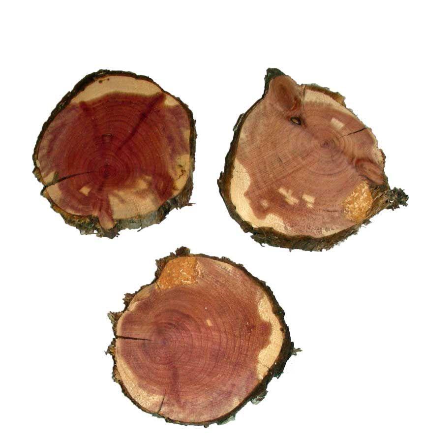 """Wood Round Eastern Cedar 2"""" - 3"""""""