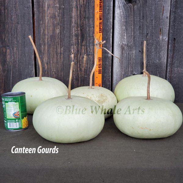 4614 Canteen gourds