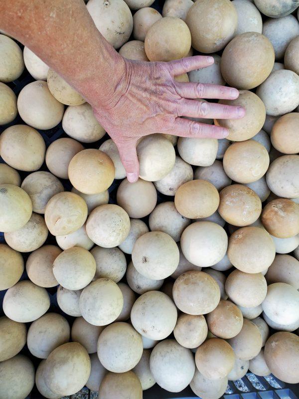 Round Ornament gourds