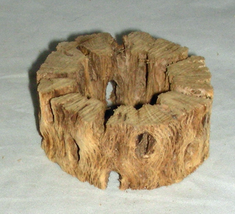 Chain Fruit Cholla Wood