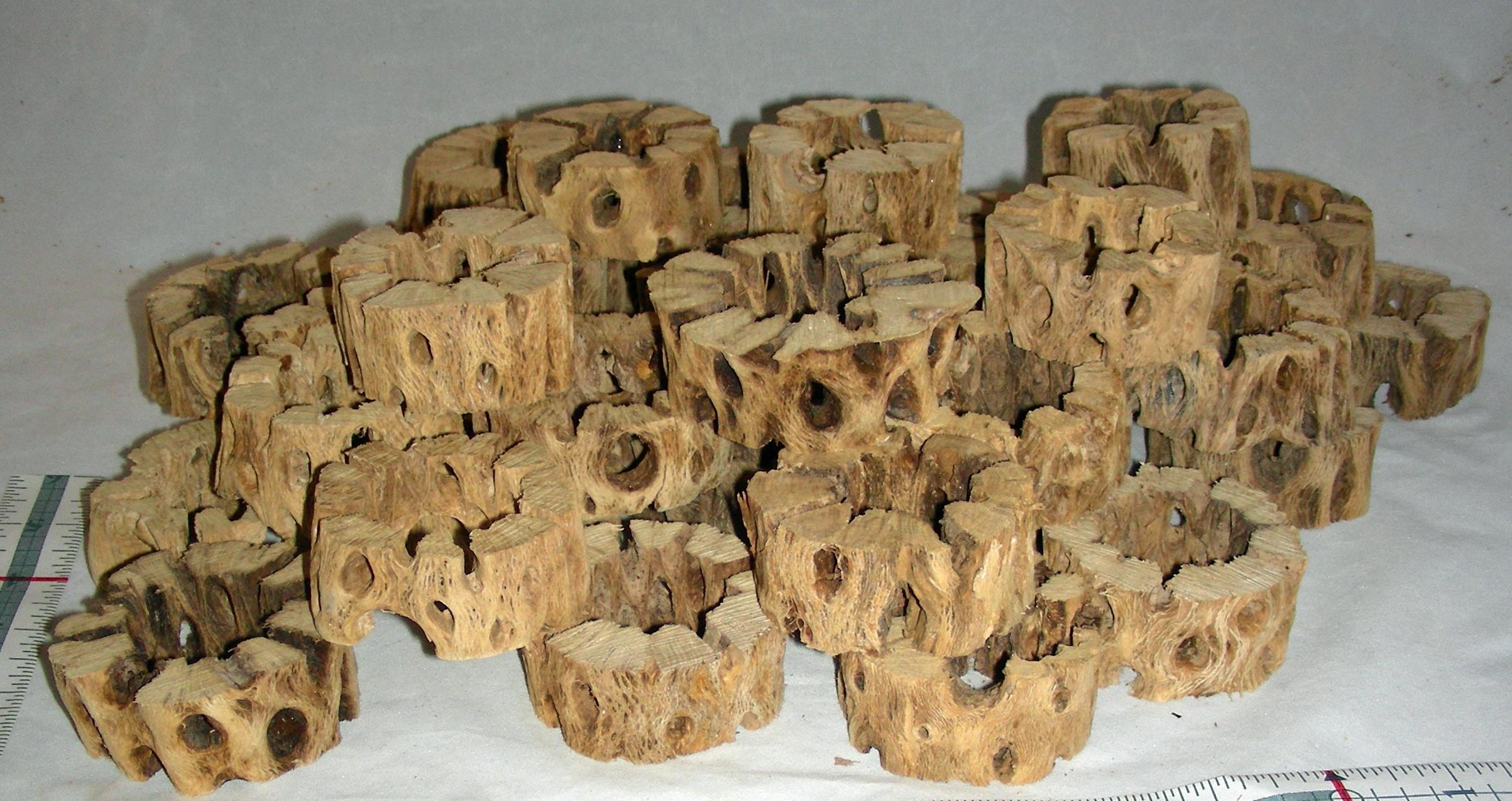 Chain Fruit Cholla Wood