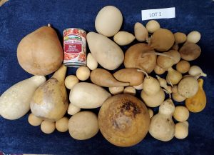 craft ready gourd lot 1