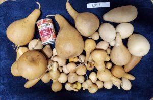Gourd Mixed Lot 2