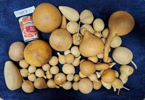 Mixed gourd Lot 3