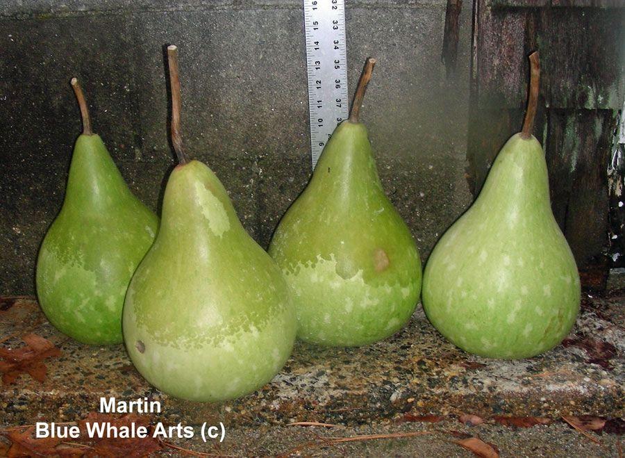 Martn Gourd seeds