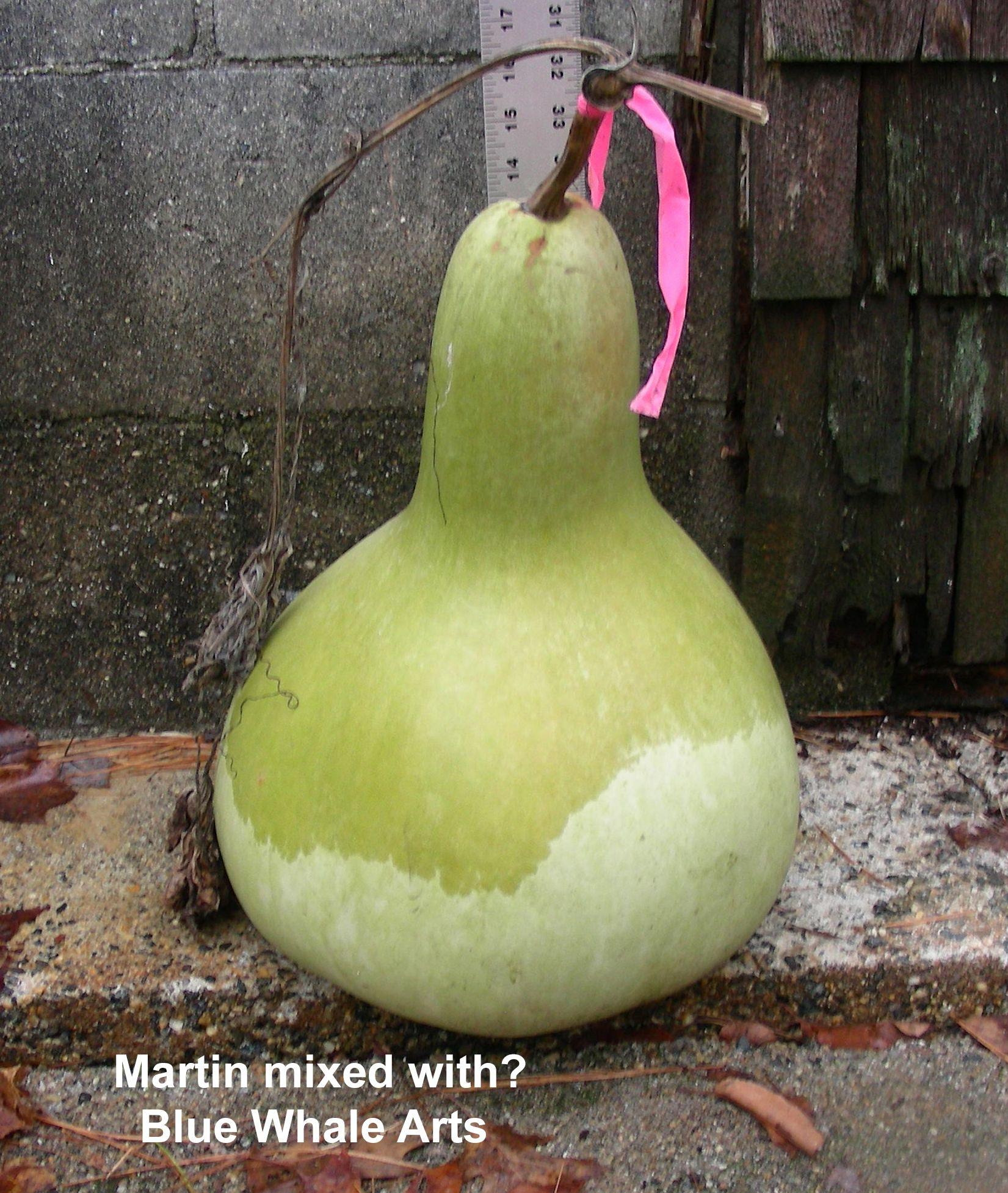 Martin Gourd Seeds