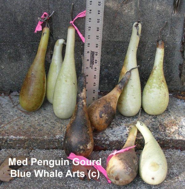 Medium Penguin Gourd Seeds