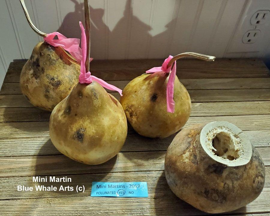 Mini Martin Gourd Seeds