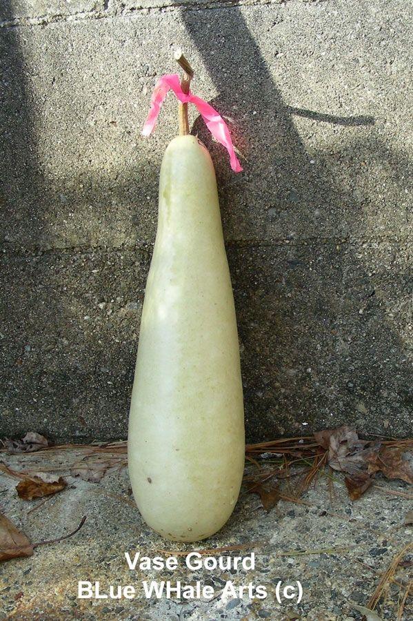 Vase Gourd Seeds