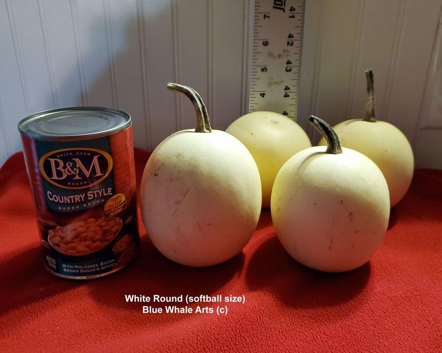 White Round Gourd seeds