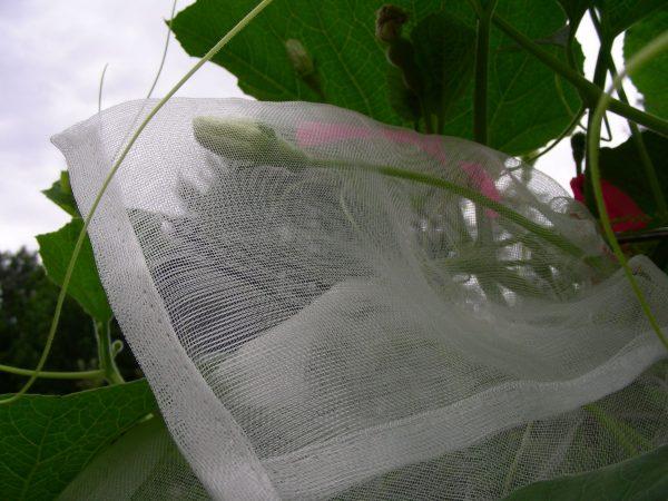 Pollination Bag