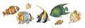 Tropical_Fish_RO-007