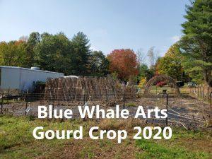 gourd-harvest-2020-