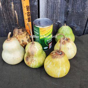 """4"""" Pear Gourd"""