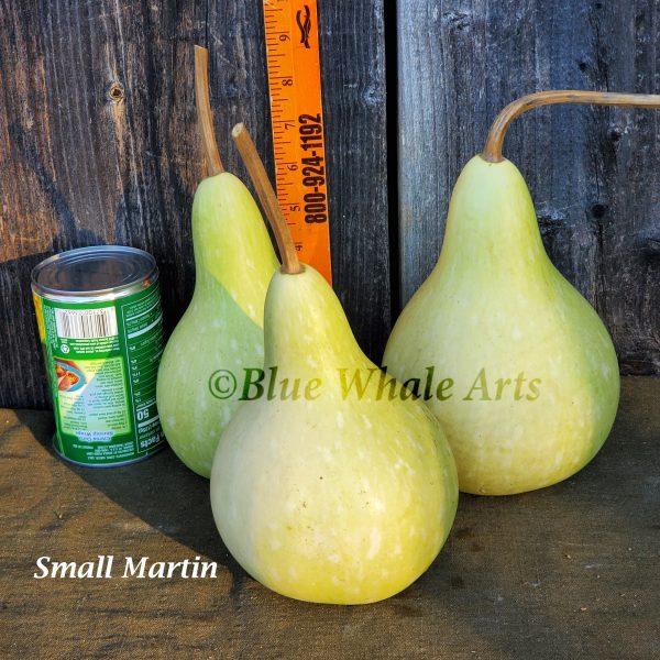 5675 Small Martin