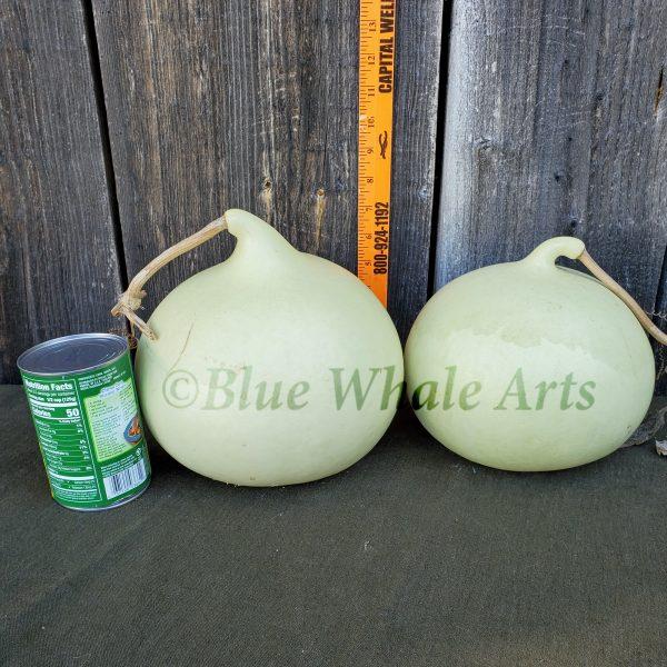 Basketball Gourd Seeds